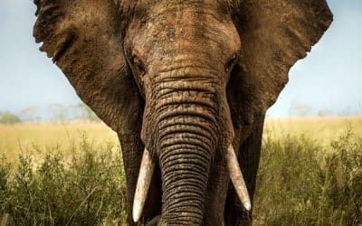 Monthly Motivation | Elephants offer a Leadership Lesson